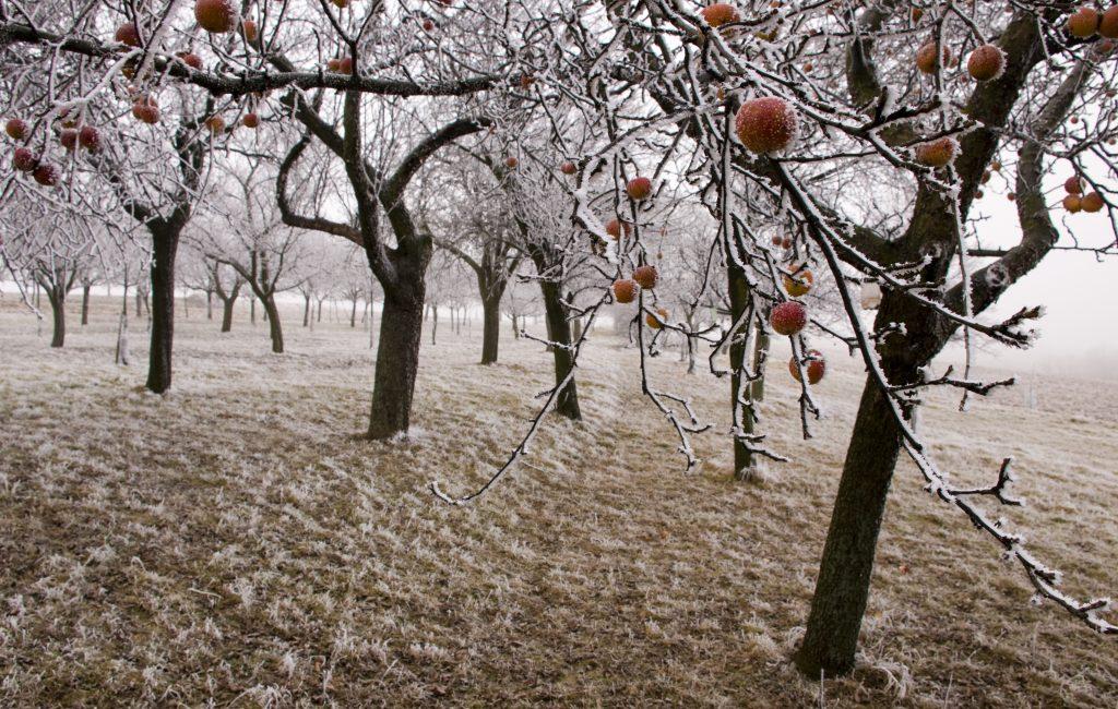 Book 4 Apple Moonlight Christmas – Description